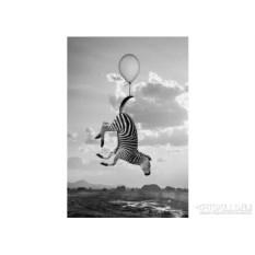 Женская футболка «Зебра на воздушном шаре»