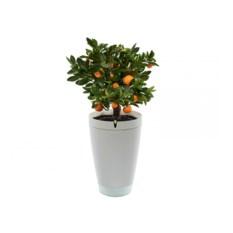 Умный горшок для выращивания растений Parrot Pot