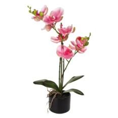 Декоративная композиция Трепетная орхидея