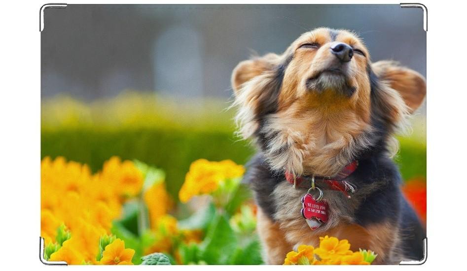 Обложка на ветеринарный паспорт Блаженство