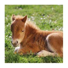 Паззл Красивые лошади