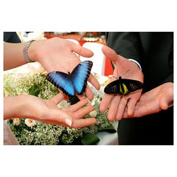 «Фейерверк из бабочек»