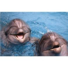 Сертификат Эксклюзивное купание с дельфинами для двоих