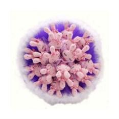 Букет из мягких игрушек Зайчата (21 шт., цвет — розовый)