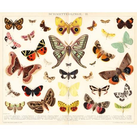 Хромолитография «Бабочки»