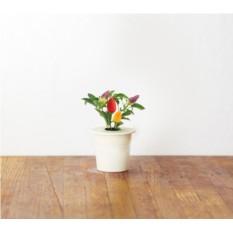 Картридж для выращивания Перец для умного сада