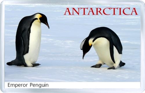 Магнит: Антарктида. Императорский пингвин