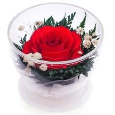 Композиция из красной розы в подарочной упаковке