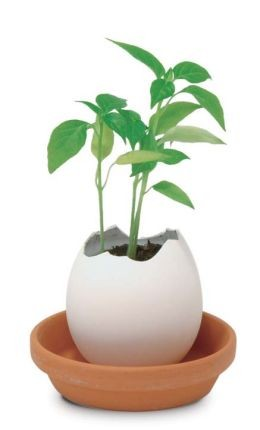 Набор для выращивания Eggling, кайенский перец