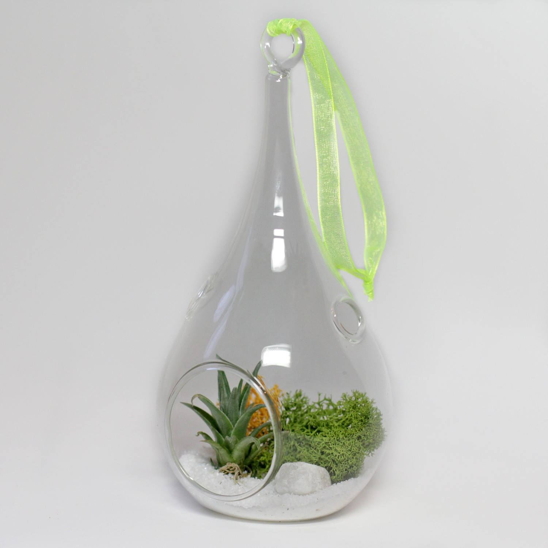 Новогодний флорариум (тилландсия атмосферная)