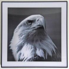 Картина Орел с эффектом 3D