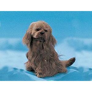 Собака «Коккер-спаниэль»