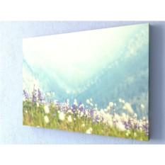 Фотокартина Горные цветы