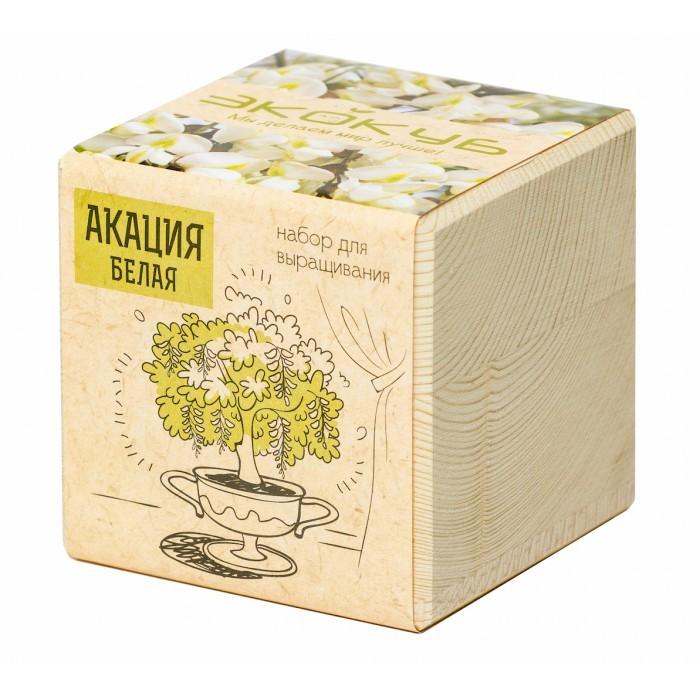 Набор для выращивания Эко куб Акация