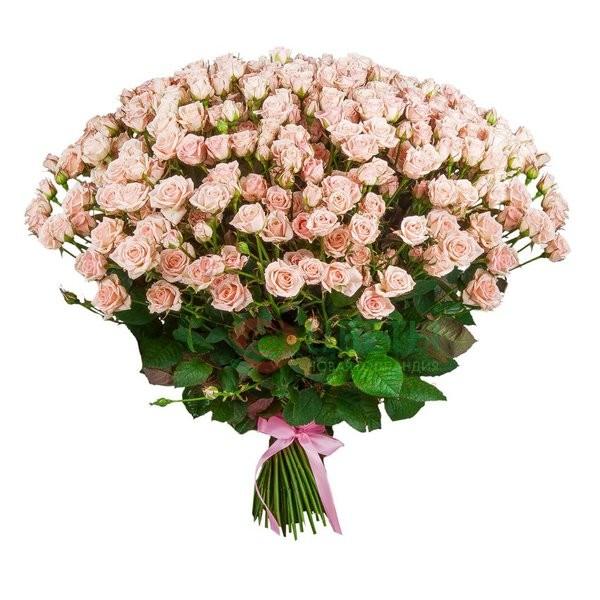Букет роз Yana (101 шт)