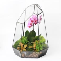 Сад в стекле (флорариум) Орхидея 40см