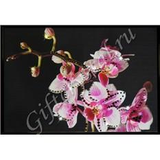 Картины с кристаллами Swarovski Маленькая орхидея