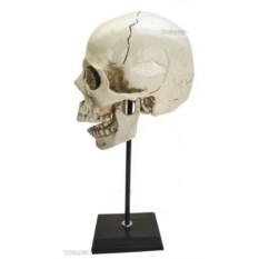 Декоративный человеческий череп (макет, 35 см)