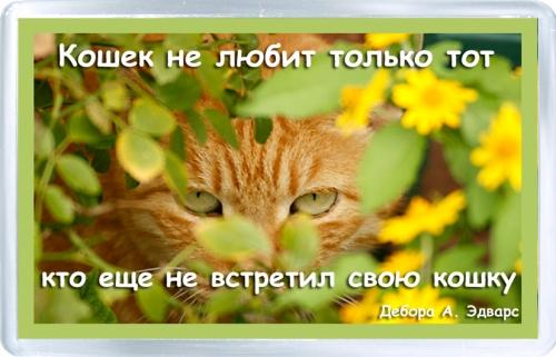 Магнитный подарок: Все любят кошек