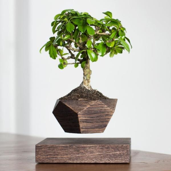 Левитирующий горшок из дерева Бонсай