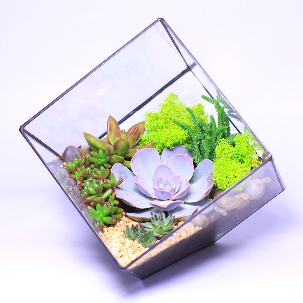 Сад в стекле Куб
