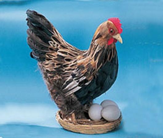 Модель «Курица с гнездом»