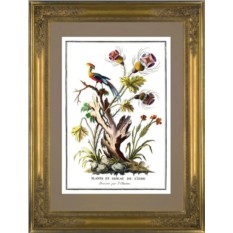 Картина Жак Шартон (J. Charton) Экзотические цветы и птица из Индии