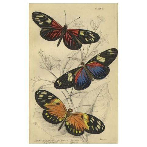 Бабочки: Heliconia Erato, H.Cynisca, H.Sylvana