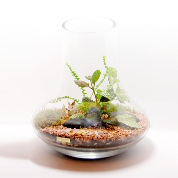 Флорариум (фиттония, солейролия, мох)