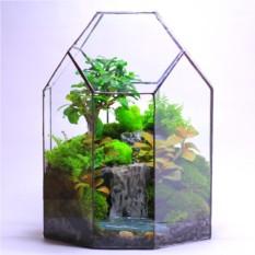 """Сад в стекле """"Таинственные тропики"""""""