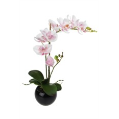 Декоративная композиция Свежесть орхидей