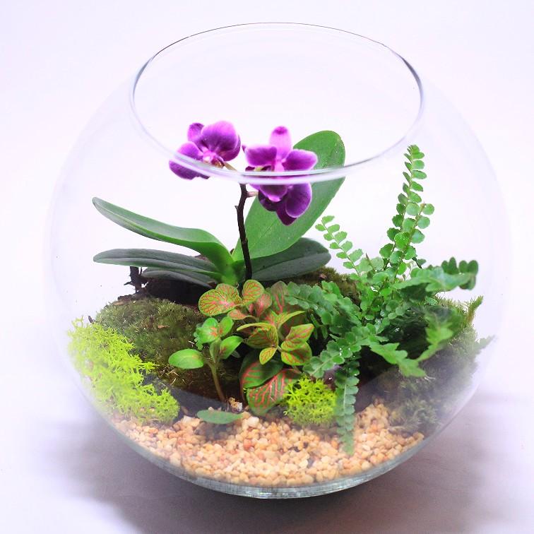 """Сад в стекле """"Влюбленная орхидея"""""""