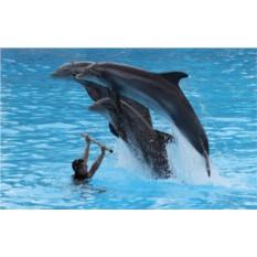 Подарочный сертификат Эксклюзивное купание с дельфинами