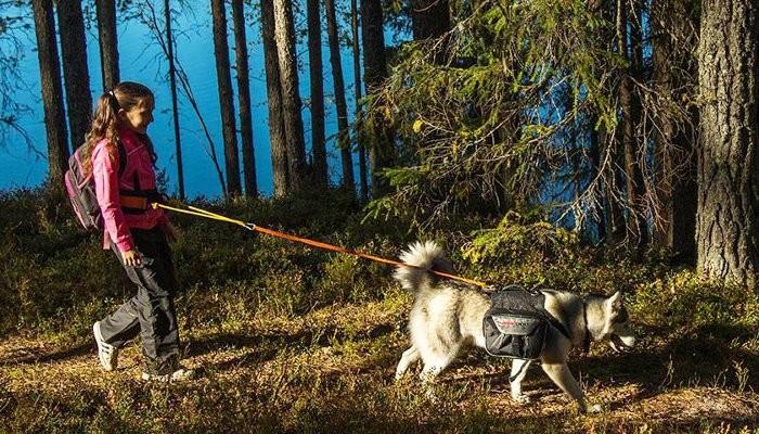Сертификат Двухдневный трекинг с собаками в Южной Карелии