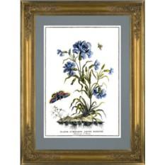 Картина Жак Шартон (J. Charton) Гвоздика синяя