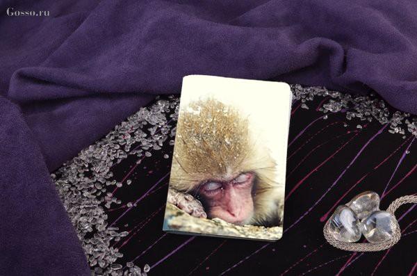 Обложка для паспорта / автодокументов Спящая обезьянка