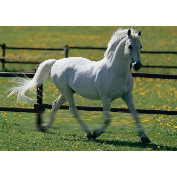 Пазл «Белый конь»