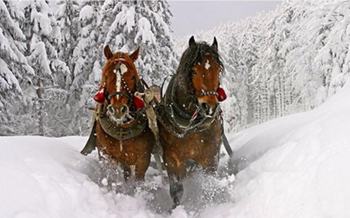 Подарочный сертификат Катание на санях запряженных лошадью