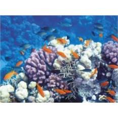 Посещение океанариума для семьи