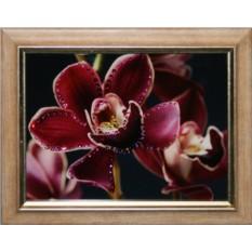 Картина с кристаллами Swarovski Цветок орхидеи