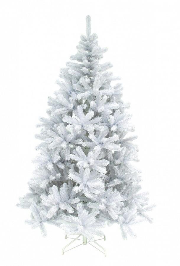 Ель Триумф Исландская, белая, 185 см