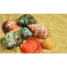 Алмазная вышивка «Цветные ракушки»
