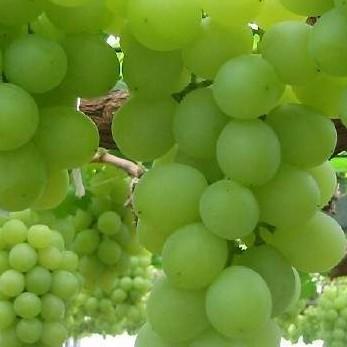 Подарочный сертификат Виноградное обертывание