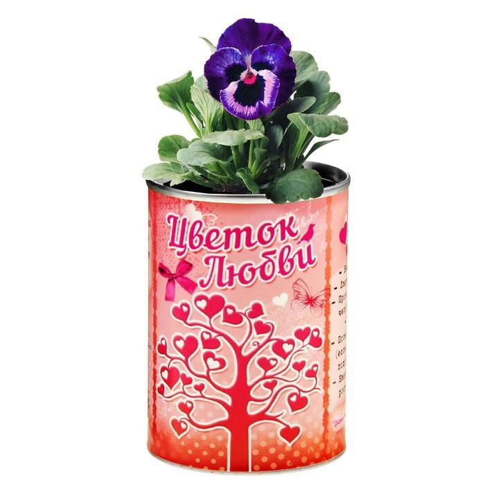 Растущая трава в консервной банке Цветок любви, фиалка