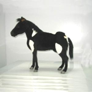 Шотландский пони 106 см (черно-белый)