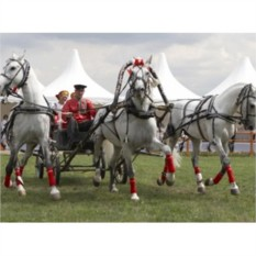 Катание на тройке лошадей в санях/карете