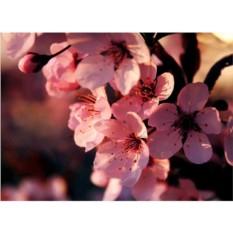 Набор для вышивки стразами «Вишня в цвету»