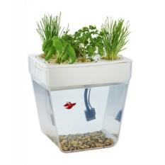 Самоочищающийся аквариум «Акваферма»