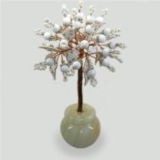 Дерево Белоснежное чудо