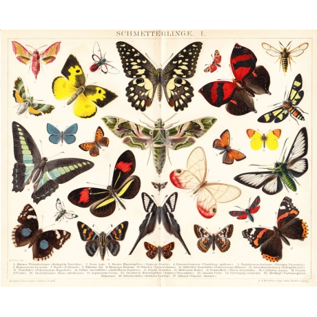 Литография «Бабочки»
